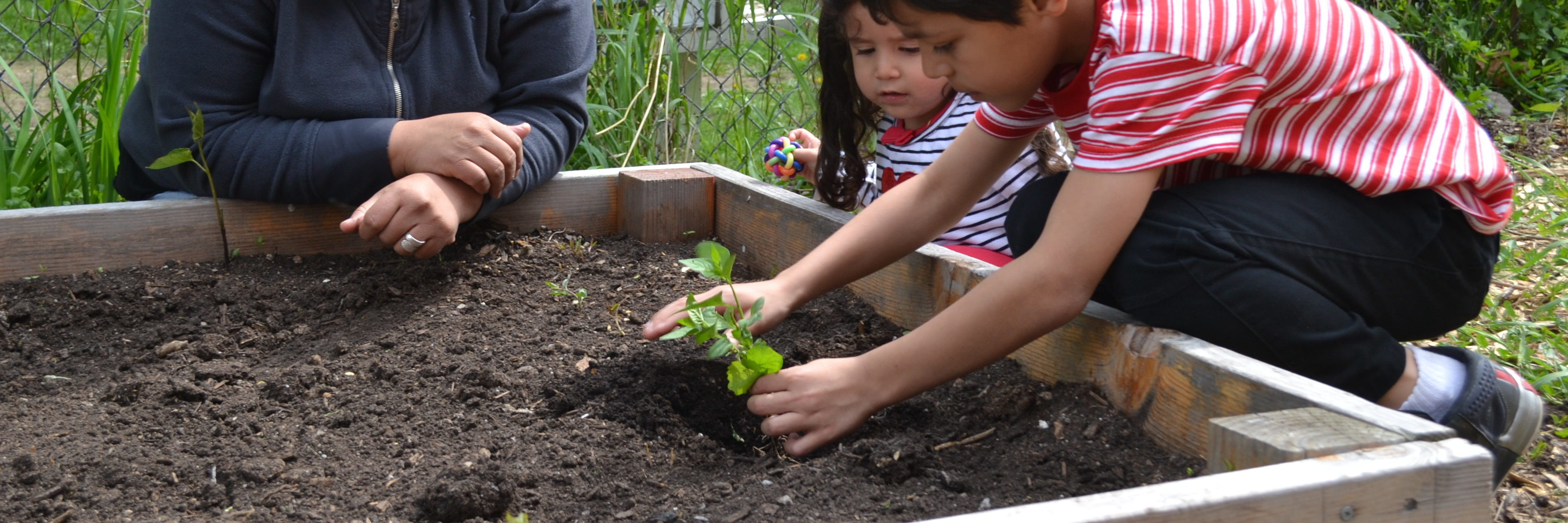 Kids planting veggies